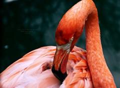 Animals Angry Bird