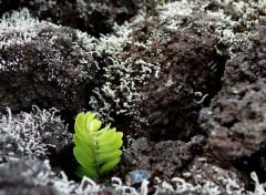Nature La vie survit