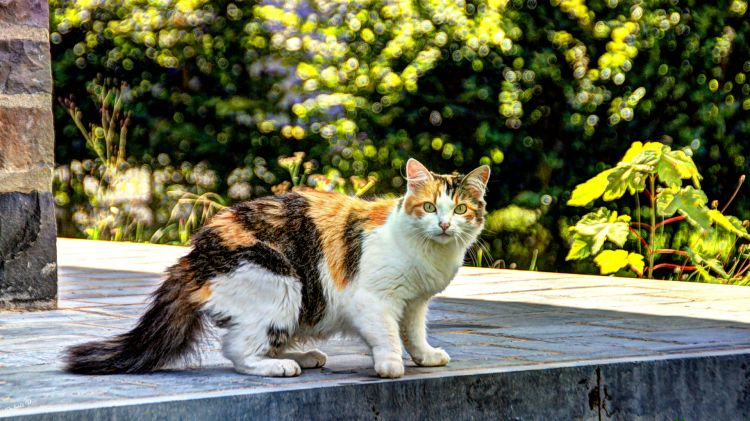 Wallpapers Animals Cats - Kittens chat poseur