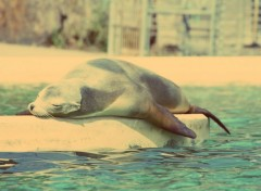 Animals se prélasser au soleil