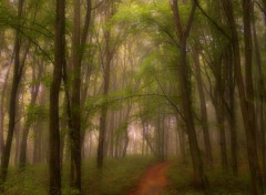 Nature Brouillard du matin
