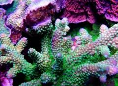 Animaux Mon aquarium
