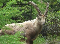 Animals Chamonix 2013