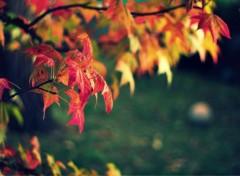 Nature Feuilles d'automne