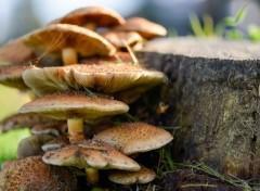 Nature Couleurs d'automne