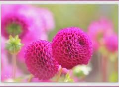 Nature Image sans titre N°391740