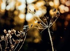 Nature Image sans titre N°395609