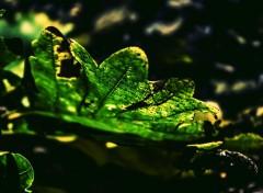 Nature Image sans titre N°395610