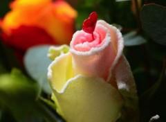 Nature Amour éternel