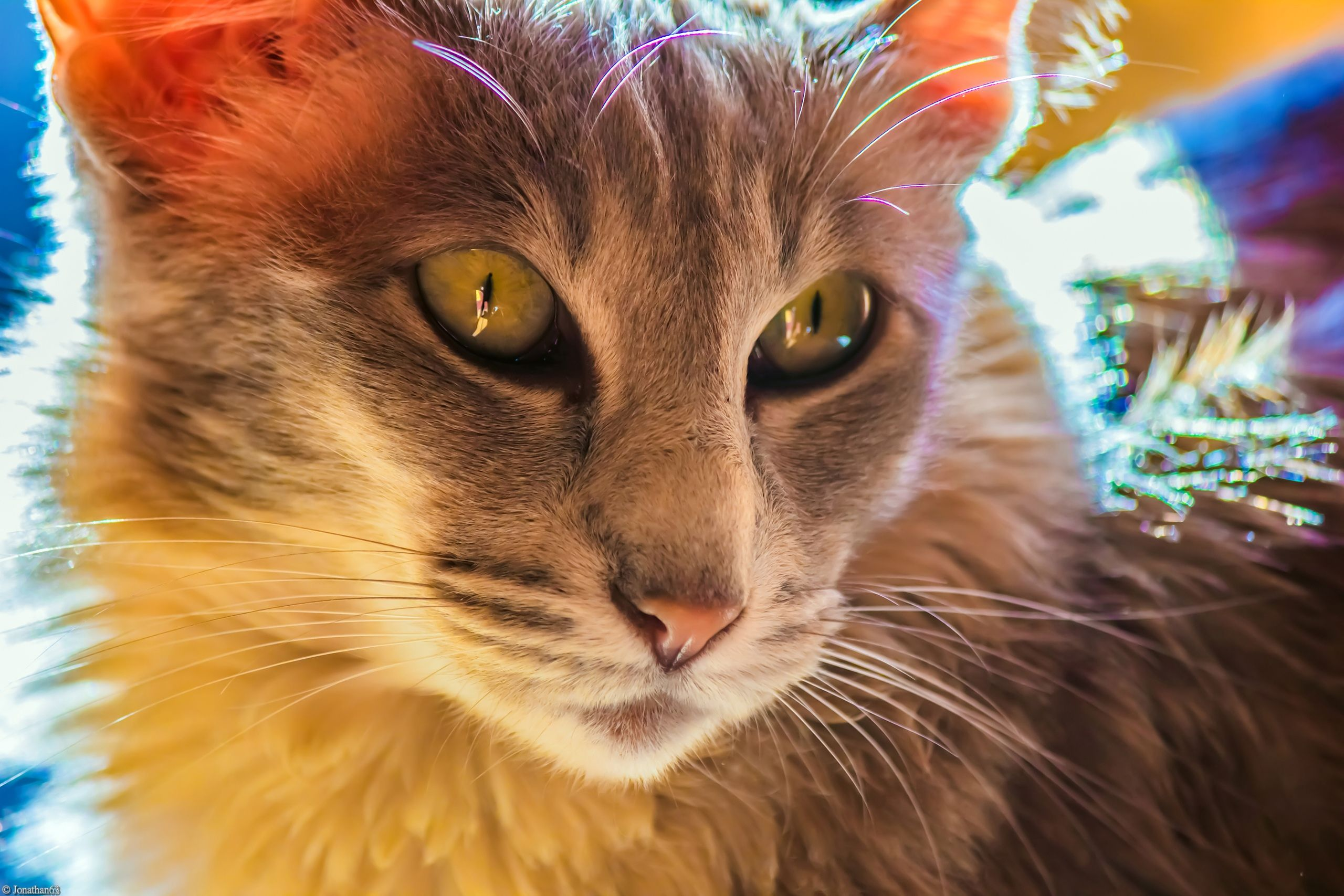 Wallpapers Animals Cats - Kittens