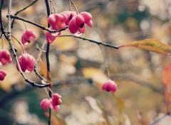 Nature Rosée rose