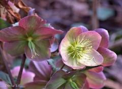 Nature Jardin des plantes Lille