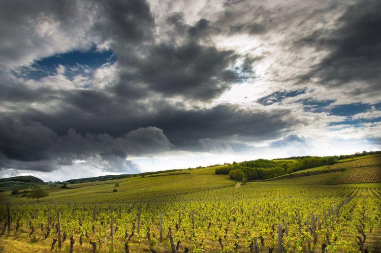 Fonds d'écran Nature Vignes - Vignobles Wallpaper N°401664