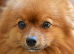 Animaux Petit chien poilu