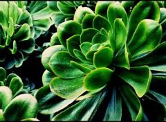 Fonds D Ecran Plantes Grasses Categorie Wallpaper Nature Hebus Com