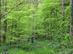 Nature FORET DE PHALEMPIN