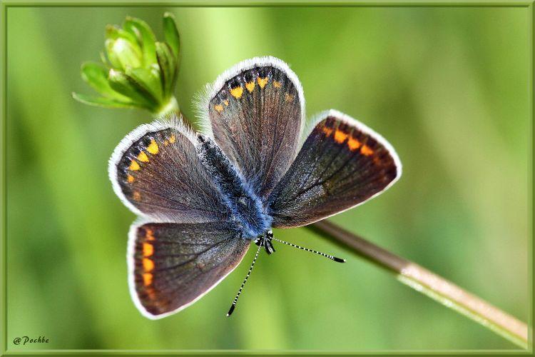 Fonds d'écran Animaux Insectes - Papillons Wallpaper N°406701