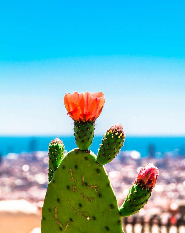 Fonds d'écran Nature Cactus Wallpaper N°406706