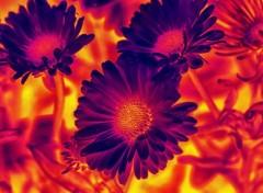 Art - Numérique Fleurs de feu