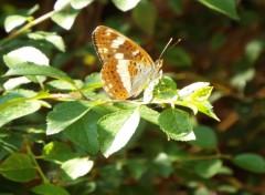 Animaux papillon 1