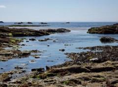Nature presqu'île de Quiberon