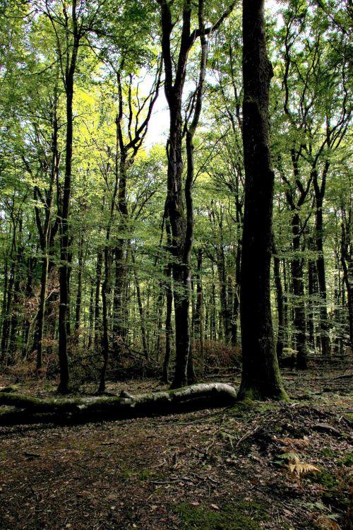 Wallpapers Nature Trees - Forests forêt en fin d'été