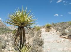 Voyages : Amérique du nord Red Rock Canyon