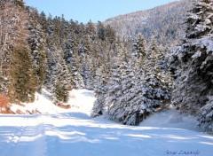 Nature autrans sous la neige