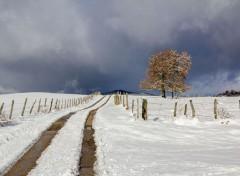 Nature retour de la neige