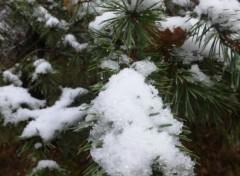 Nature neige