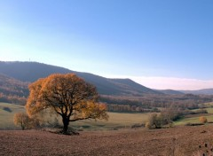 Nature balade d'automne