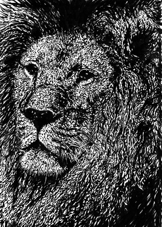 Wallpapers Art - Pencil Animals - Lions lion king