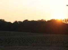Nature Coucher de soleil sur culture maraichere