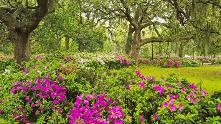 Wallpapers Nature Flowers garden-flowers