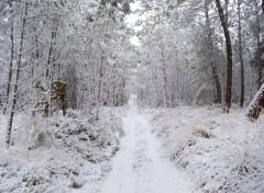 Nature forêt de Bercé