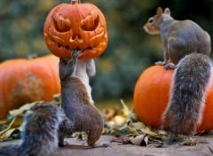 Art - Numérique halloween_squirrels