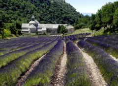 Nature L'abbaye de Sénanque (Vaucluse)