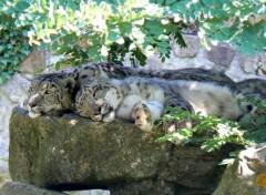 Animals Safari de peaugres 05