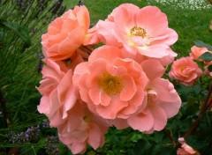 Nature Fleur 03
