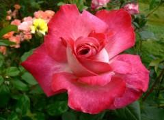 Nature Fleur 04
