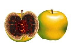 Humour Pomme De Terre