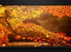 Nature Image sans titre N°439439