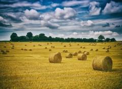 Nature Paysage de l'Auxois au moment de la moisson 2016