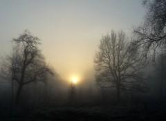Nature Matin d'hiver