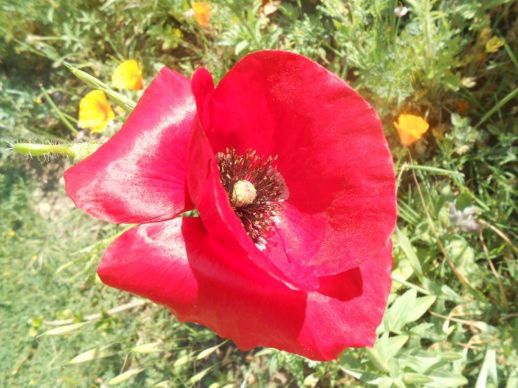 Fonds d'écran Nature Fleurs Fleur