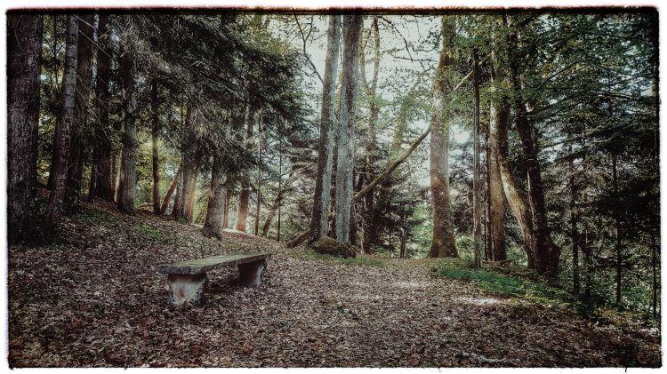 Wallpapers Nature Trees - Forests Le banc dans la forets
