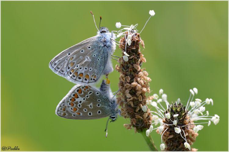 Fonds d'écran Animaux Insectes - Papillons Wallpaper N°447781