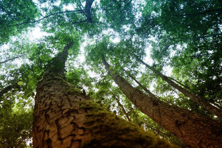 Fonds d'écran Nature Arbres - Forêts Wallpaper N°449821