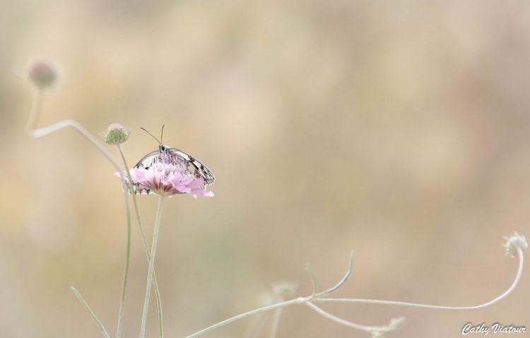 Fonds d'écran Animaux Insectes - Papillons Wallpaper N°453315