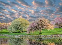 Nature Pommiers en fleur